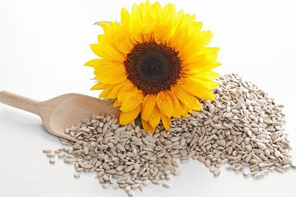 Sunflowerseed protein machine